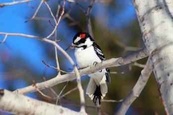 birds-3863894_1920