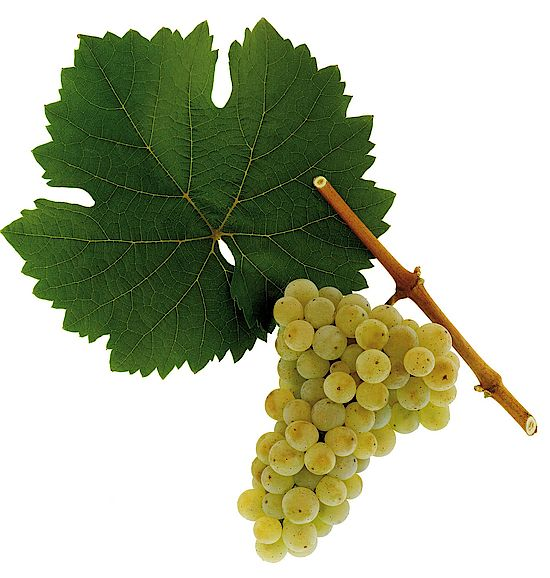 Riesling is only one of the grape varieties that has extremely good results in Eden Valley