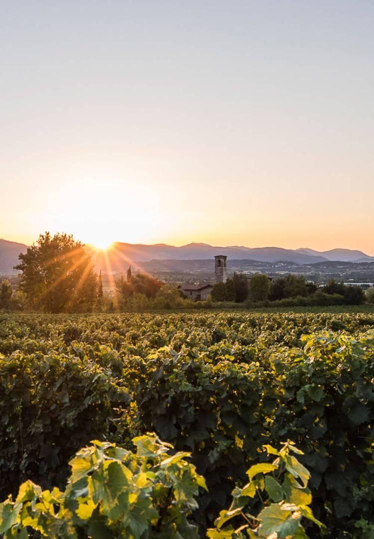 The vineyards of Bellavista