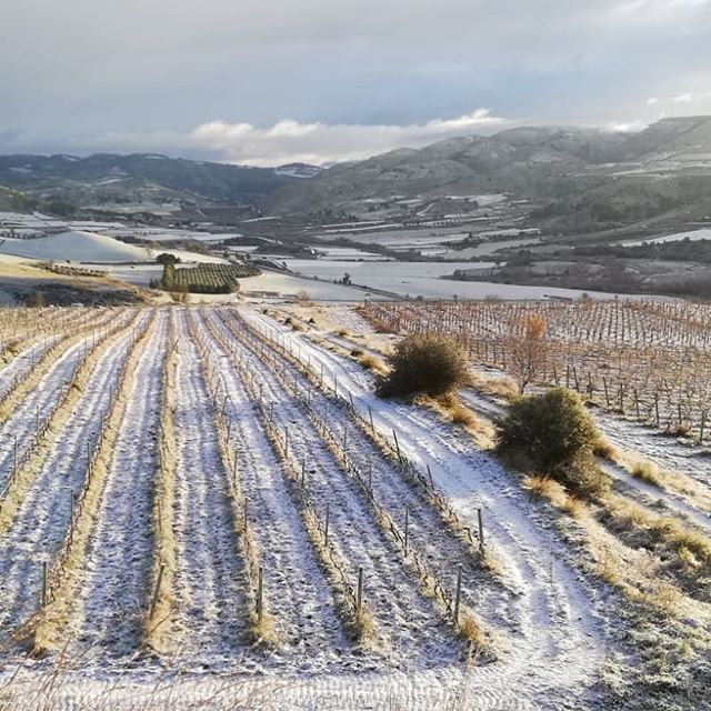 …… and the vines resting in winter