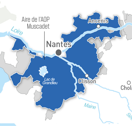 "The Sèvre and Maine rivers cut a ""Y"" through the Sèvre-et-Maine wine region"