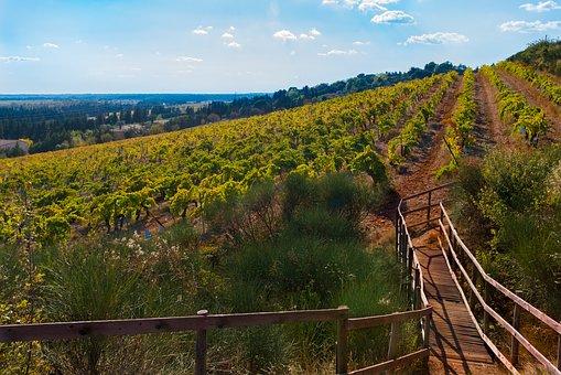 Costières de Nîmes vineyards in autumn