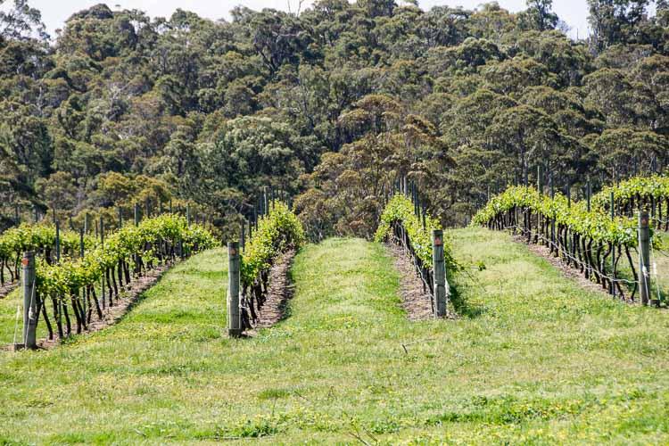 Estate 807 vineyard and coastal rain forest