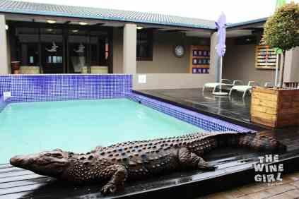 bakwena-crocodile