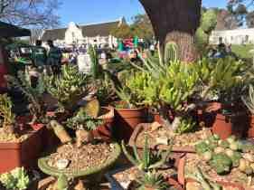 Vergenoegd market plants
