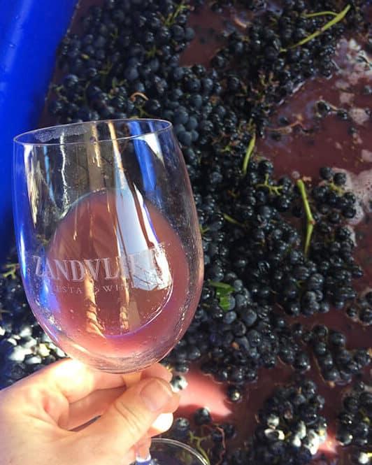 wine juice glass
