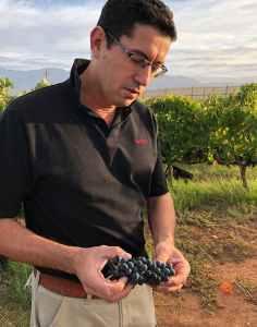 zandvliet harvest wine maker