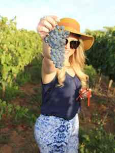 zandvliet wine grapes the wine girl cape twon