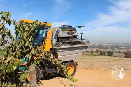 zevenwacht harvest machine