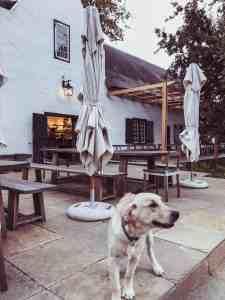 Buitenverwachting Constantia wine tasting room dog