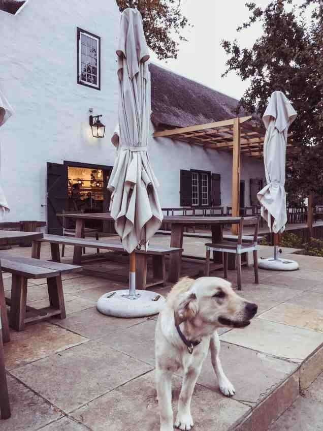 Buitenverwachting Constantia wine tasting room dog