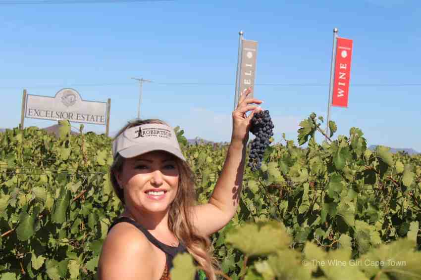 Hands on Harvest Robertson Wine Valley