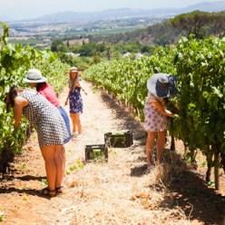 Harvest Festival 2020 Stellenbosch