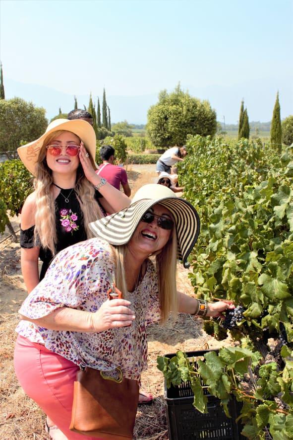 Grand Provence Harvest Festival 2020 Franschhoek