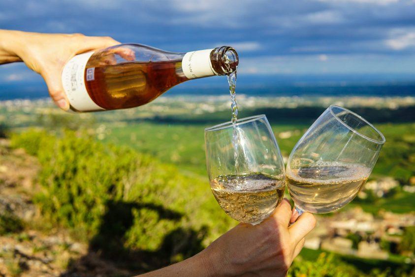 Loja Vinhos Online The Wine Jungle