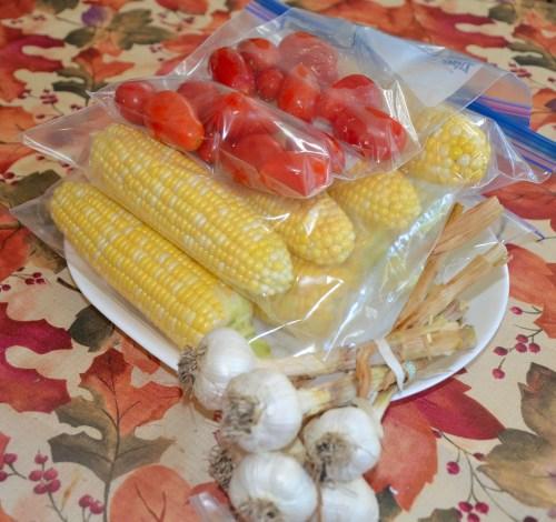 Corn ready to freeze