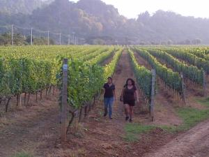 walking amongst Gran Monte's vineyards, Khao Yai