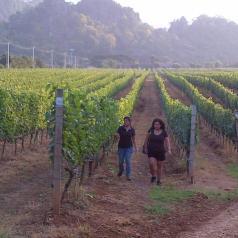 Google Hangout with Nikki Lohitnavy, head winemaker at Granmonte Vineyard