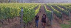 Google Hangout with Nikki Lohitnavy, head winemaker at Granmonte Vineyard