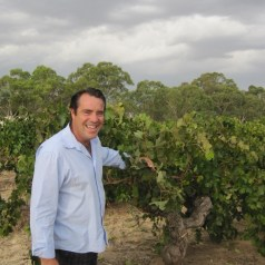 Oldest vines in Australia (and maybe the world) at Langmeil Winery, Barossa Valley