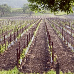 Guest post – 5 incredible wine destinations