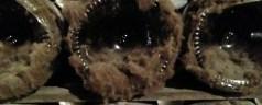 Champagne cellar snapshot