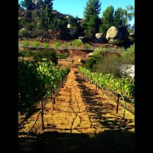 Eagles Nest vineyard