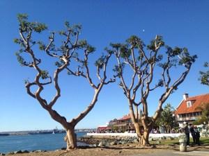 Seaport Village, 15 min walk away