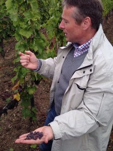Laszlo with a handful of Azsu in the vineyard
