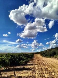 Ochoa vineyard