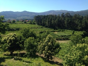 view from Soalheiro winery, those mountains are in Spain