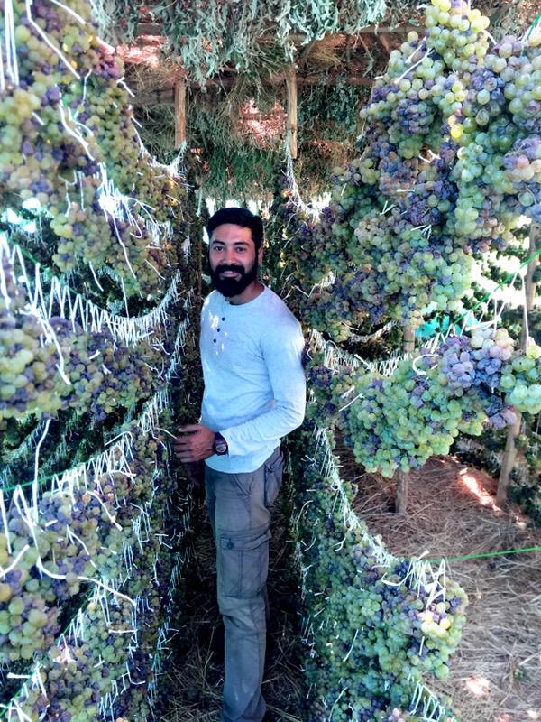 winemaker Sanket Gawand standing amongst his drying Chenin Blanc, passito wine, winery, Nashik Valley, Maharashtra, India, Indian Wine