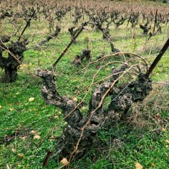 Domaine Henry, organic wines of St Georges d'Orques