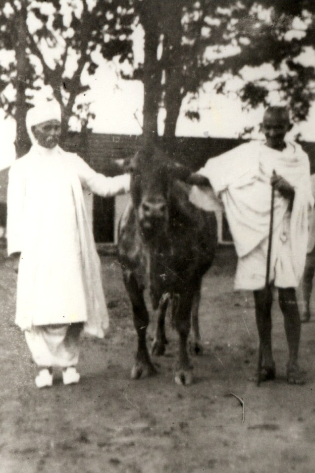 Gandhi and Malaviya with a cow. Credit: ICAR