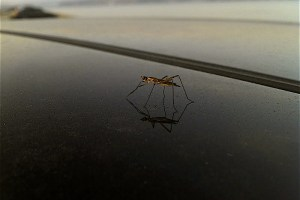 A mosquito. Credit: edans/Flickr, CC BY 2.0