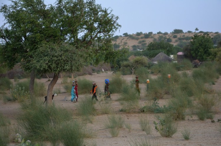 The residents of the Thar Desert are totally dependent on groundwater and rain for drinking water and agriculture. Credit: Amar Guriro