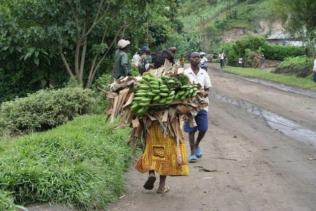 kivu-bananas-629x420