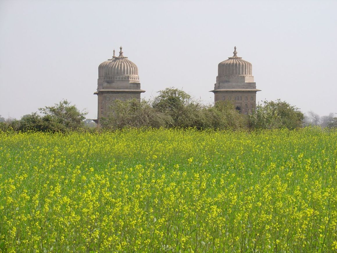 A mustard field with a temple in the background. Credit: amanderson/Flickr, CC BY 2.0