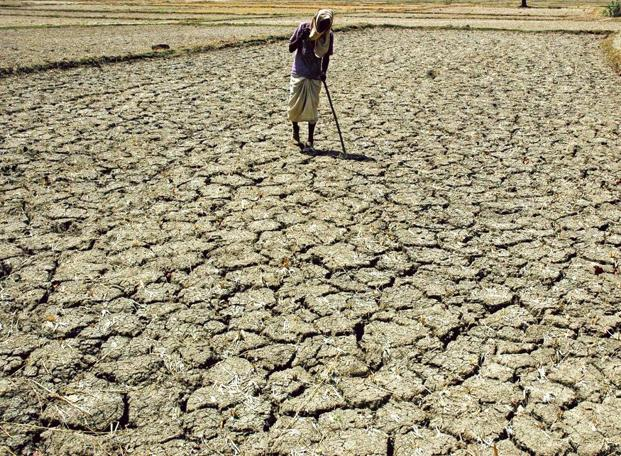 A farmer has committed suicide because he could not pay back loans once his crop insurance failed. Representational image. Credit: Reuters/Files