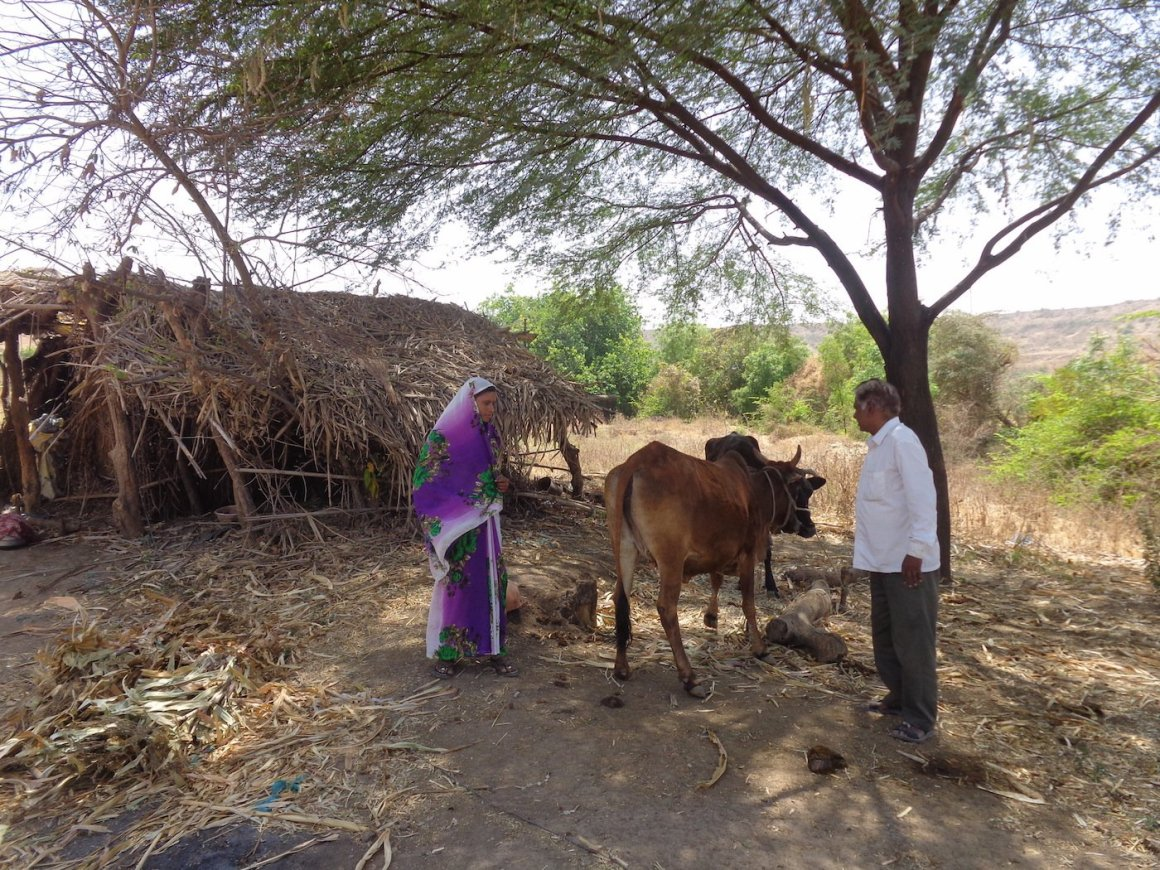 Jadhav and his daughter-in-law with their two remaining cows in front of their hut in Ganori village​ Credit: Parth M.N