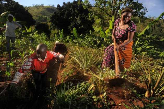Farmers clear weeds from a trench, which retains water and prevents soil erosion during rains, as part of the FAO project to strengthen capacity of farms for climate change in Kiroka, Tanzania. Credit: FAO