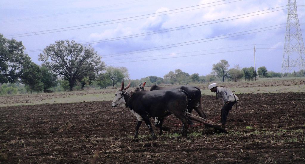 Marathwada farmers are fighting against all odds in the current kharif season. Credit: Nidhi Jamwal