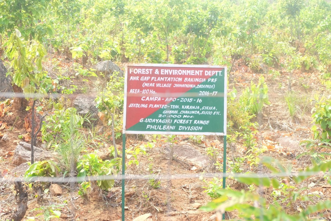 Forest department board in Pidikia of Odisha informing of compensatory afforestation plantation. Credit: Gaurav Madan