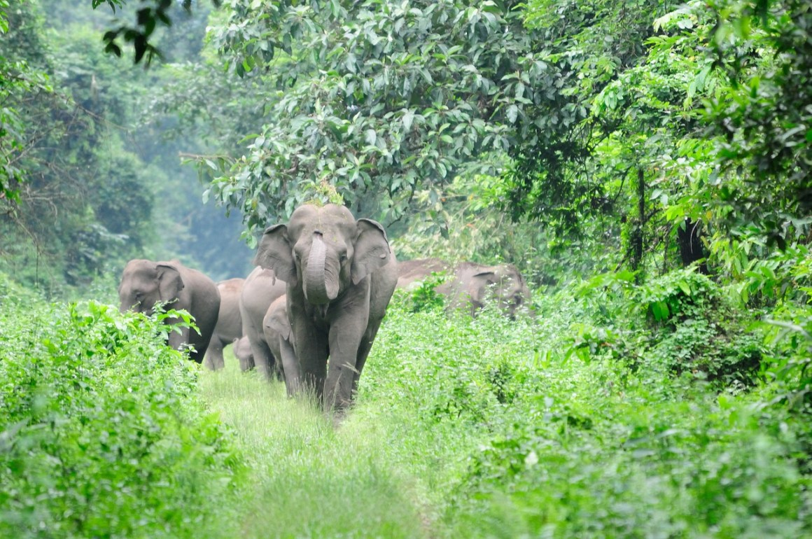 Elephants in the wild. Credit: awlw/pixabay
