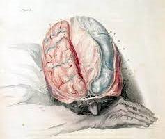 Anatomy of the brain. Credit: Flickr
