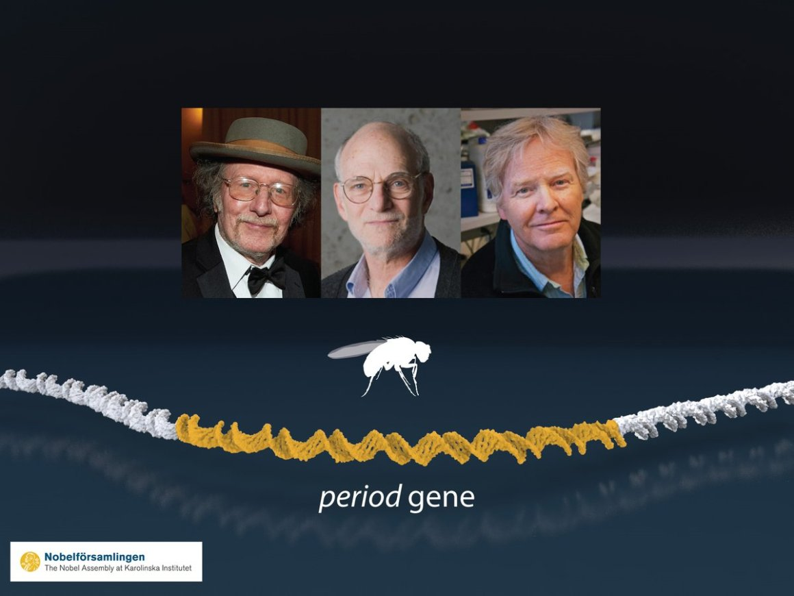 2017 Medicine Laureates Jeffrey C. Hall, Michael Rosbash and Michael W. Young. Source: nobelprize.org