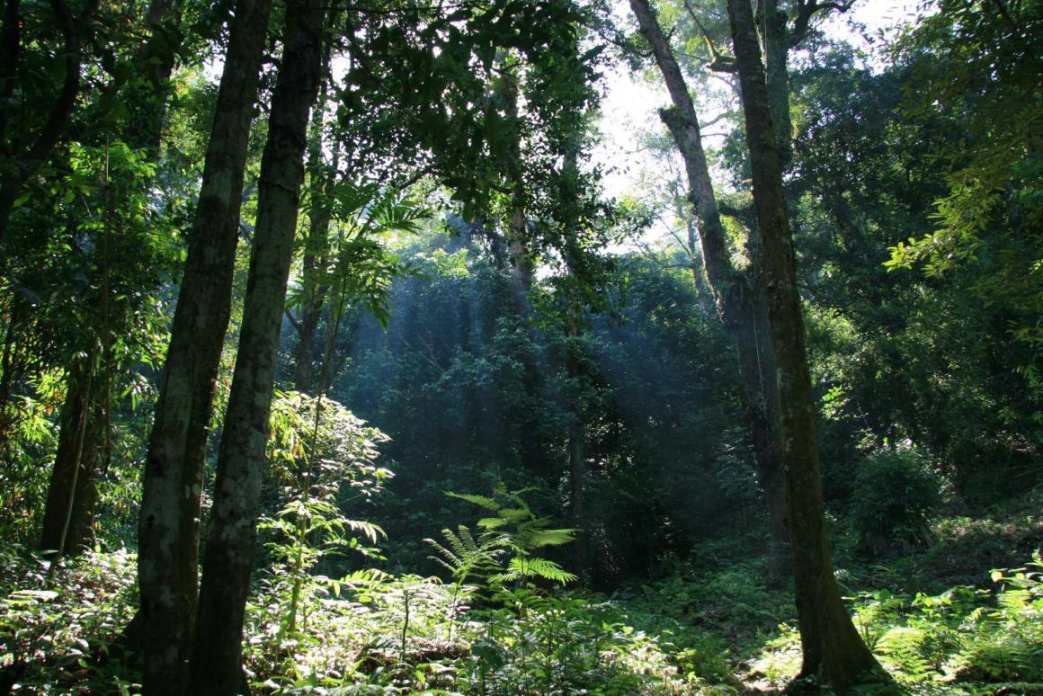 Gunung Palung National Park. Credit: Wikimedia Commons