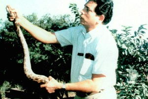 Lalji Singh with an Indian rock python in 2002. Credit: indianscholarscongress/Flickr, CC BY 2.0