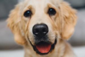 night-animal-dog-pet-medium
