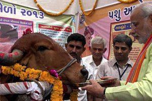 Modi Cow PTI1024x5752